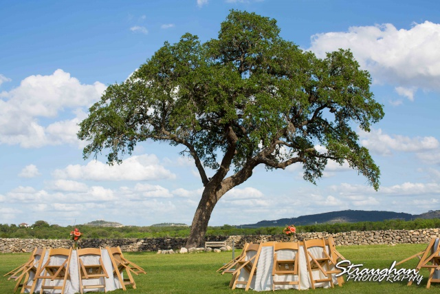 1850 Settlement wedding tree and tables Lauren