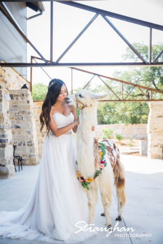 Park 31 styled shoot bride kissing llama