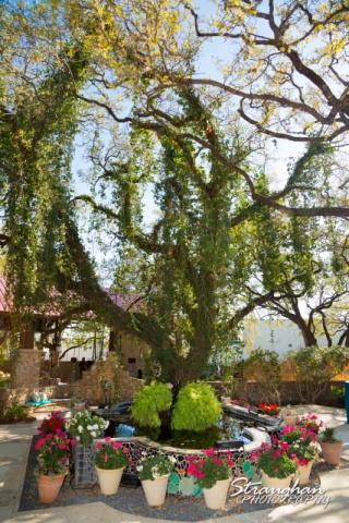 the tree at the Veranda Open House
