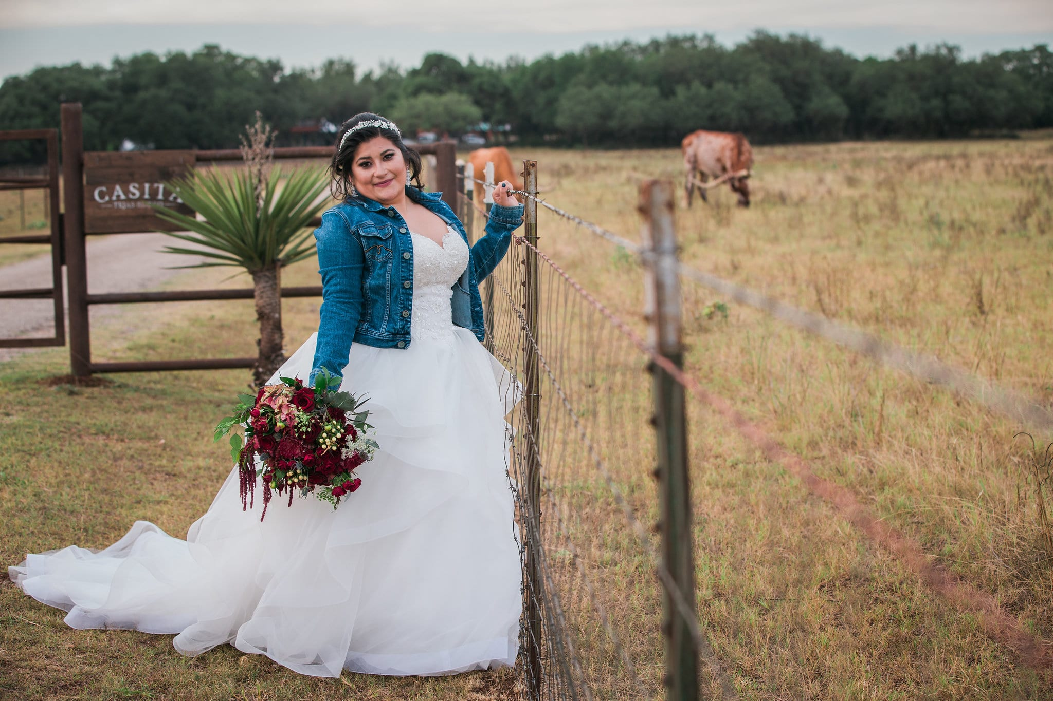 Laura's Bridals at Western Sky in the field at the gate with cow
