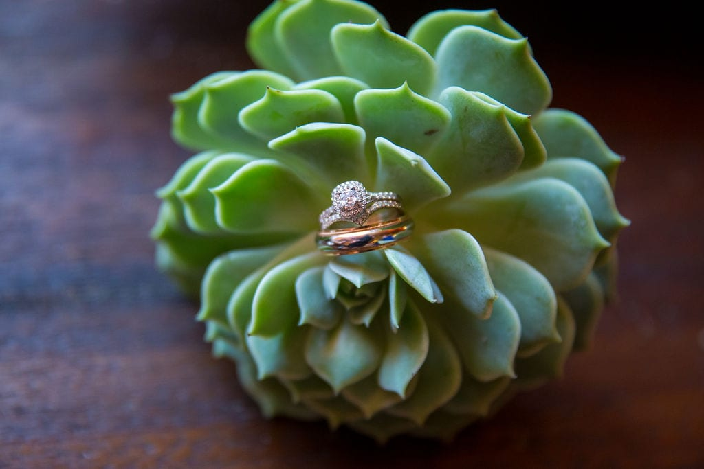 Laura wedding Western Sky rings in succulent